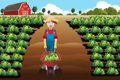 Little boy working in a vegetable farm stock illustration