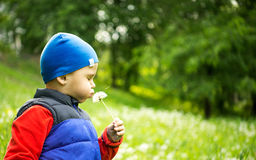 Little boy 4 - 5 years old playing outdoor on background. Young Boy Sitting In Field Blowing Dandelion. Stock Images