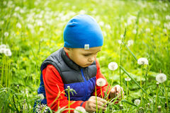 Little boy 4 - 5 years old playing outdoor on background. Young Boy Sitting In Field Blowing Dandelion. Stock Image