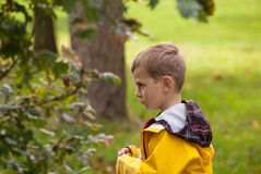 Little boy in a yellow jacket looking at tree royalty free stock photography