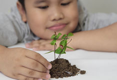 Little boy and young plant. Of a tree Stock Photos