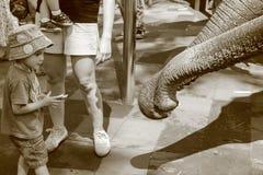 Little Boy zieht Elefanten ein Stockfotos