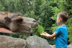 Little boy in the zoo Stock Photos