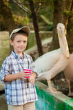 Little boy at the zoo with pelicans stock photo