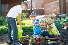 Little boys watering plant with his mother in garden Stock Photos