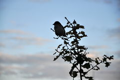Little brid on tree. A little bird hanging on a tree stock image