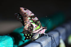 Little bright butterfly green and brown Stock Images