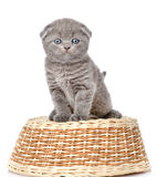 Little british shorthair kitten sitting on a basket. isolated on Stock Images