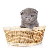 Little british shorthair kitten sitting in basket.  on w Royalty Free Stock Photos