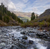 Little brook at the Altai mountains Royalty Free Stock Photos