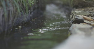 Little brook flowing stock video footage