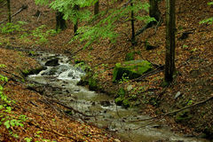 Little Brook in Forest. With Stump Wood and Rocks Covered by Moss Stock Photography