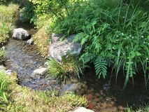Little brook. Found this little brook bubbling along happily in the countryside in Japan Stock Photography