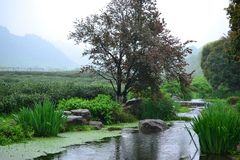 Little brook next to Chinese tea fields in Hangzhou, Zhejiang, China royalty free stock photography