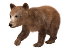 Little Brown Bear. 3D digital render of a cute little brown bear isolated on white background Stock Photography