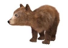 Little Brown Bear. 3D digital render of a cute little brown bear isolated on white background Royalty Free Stock Photo