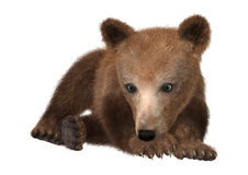 Little Brown Bear. 3D digital render of a cute little brown bear isolated on white background Royalty Free Stock Photography