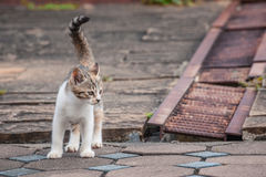 Little brown cat in the street Royalty Free Stock Photos