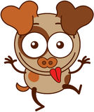Little brown dog making funny faces Royalty Free Stock Photography