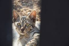 Little brown eyes cat with the dark fence in the foreground. Royalty Free Stock Photo