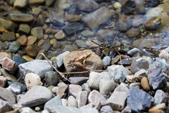 Brown frog on the rock. Little brown frog on the rock near the water Stock Image