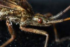 Little brown grasshopper Royalty Free Stock Photos