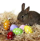 Little brown rabbit and easter eggs Stock Image