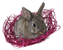 Little brown rabbit in a nest Royalty Free Stock Photos