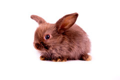 Little brown rabbit on white background Stock Photography