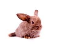 Little brown rabbit on white background Stock Photos