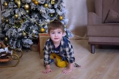 Little brunette boy in a plaid shirt near a Christmas tree. At Christmas stock image