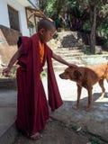 Little buddhist monk Stock Images