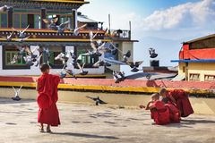 Little Buddhist monks feed pigeons on a roof royalty free stock image