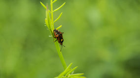 A Little Bug. A beautifull little bug descending a plants stem Royalty Free Stock Image