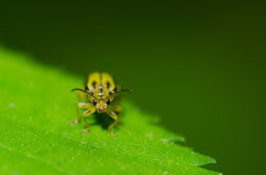 Little bug on a leaf Stock Photos