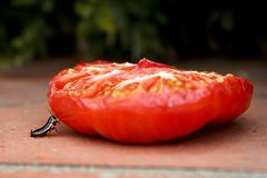Little bug pushing half a tomato stock images