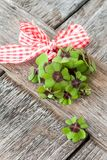 Little bunch of clovers. Little bunch of four leaved clovers with big red ribbon Stock Photo