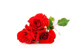 Red roses over white. A little bunch of red roses isolated on white background Royalty Free Stock Photos