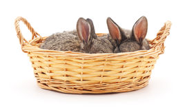 Little bunnies in a basket. Stock Photography