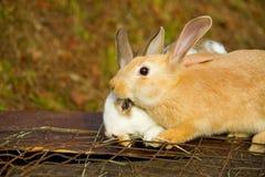 Little bunnies Stock Photos