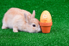 Little bunny Royalty Free Stock Photos
