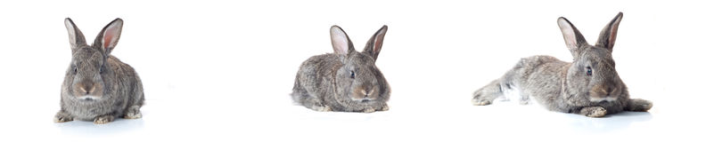 Little bunny Stock Photography