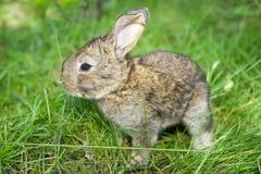 Little Bunny Stock Image