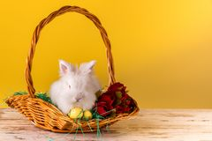 Little bunny in basket with decorated easter eggs and tulips royalty free stock photography