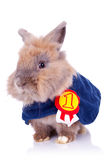 Little bunny champion Stock Photography