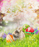 Little bunny with Easter eggs on grass over spring nature  background of  trees blossom. Easter card Royalty Free Stock Images