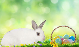 Little bunny and Easter eggs on green grass. Stock Images