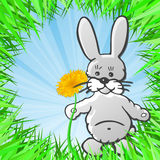 Little Bunny Royalty Free Stock Images