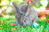 Little bunny playing in the meadow with the easter eggs Royalty Free Stock Photo