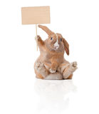 Little bunny with sign Stock Images